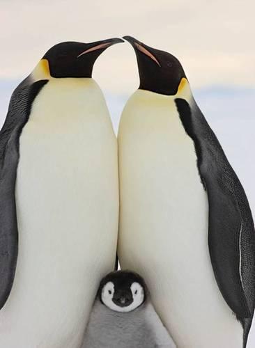 図1ペンギン親子.jpg